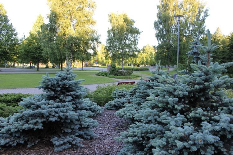 Aarneenpuisto